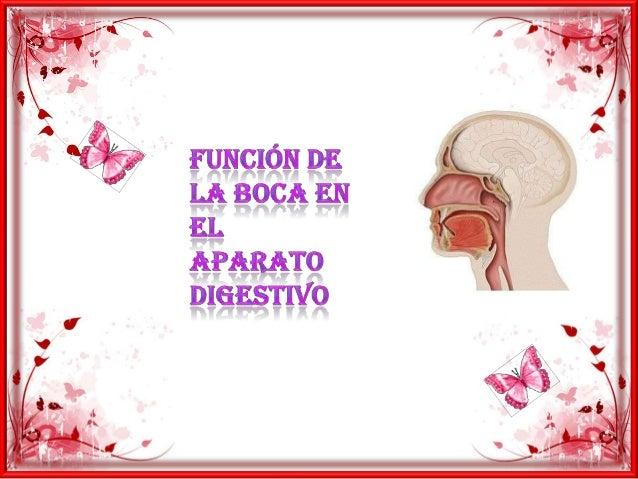 Función de la boca en elaparato digestivo:la lengua nos permite saborear,