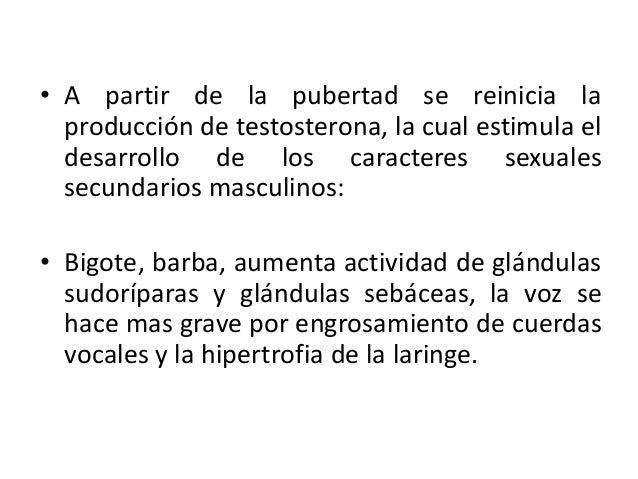 • A partir de la pubertad se reinicia laproducción de testosterona, la cual estimula eldesarrollo de los caracteres sexual...