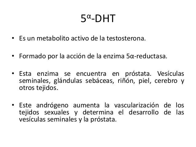 5α-DHT• Es un metabolito activo de la testosterona.• Formado por la acción de la enzima 5α-reductasa.• Esta enzima se encu...