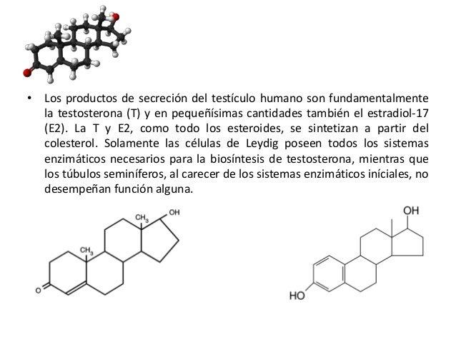 • Los productos de secreción del testículo humano son fundamentalmentela testosterona (T) y en pequeñísimas cantidades tam...