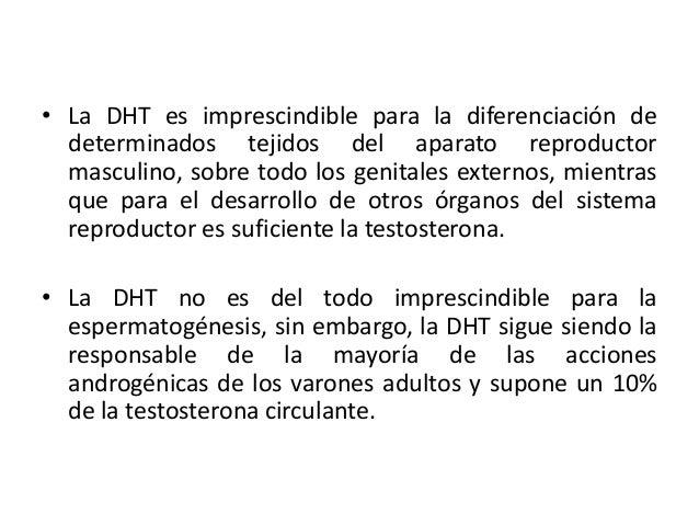 • La DHT es imprescindible para la diferenciación dedeterminados tejidos del aparato reproductormasculino, sobre todo los ...