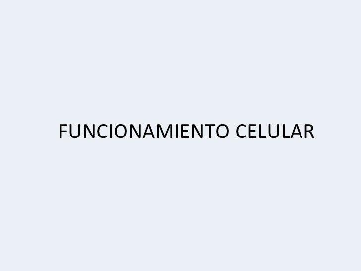 FUNCIONAMIENTO CELULAR