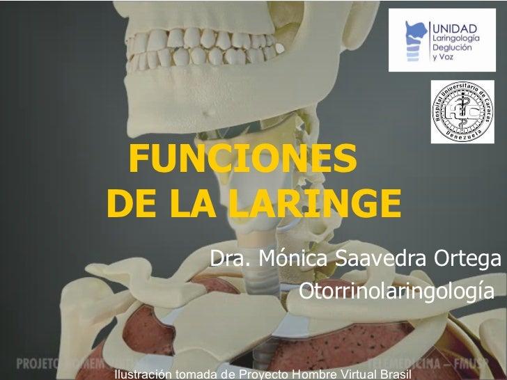 FUNCI ONES  DE LA LARINGE Dra. Mónica Saavedra Ortega Otorrinolaringología  Ilustración tomada de Proyecto Hombre Virtual ...