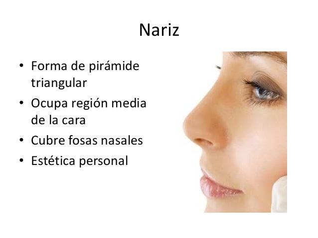 Funciones de la nariz Slide 2