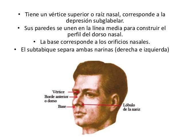 Funciones de la nariz Slide 3