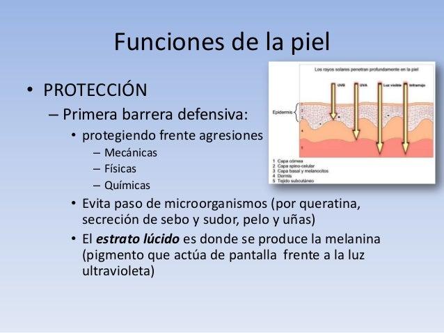 FUNCIONES DE LA PIEL PDF