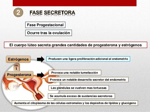 cuál es solfa syllable función del estrógeno y solfa syllable progesterona