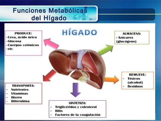 Metabolismo hepatico de farmacos