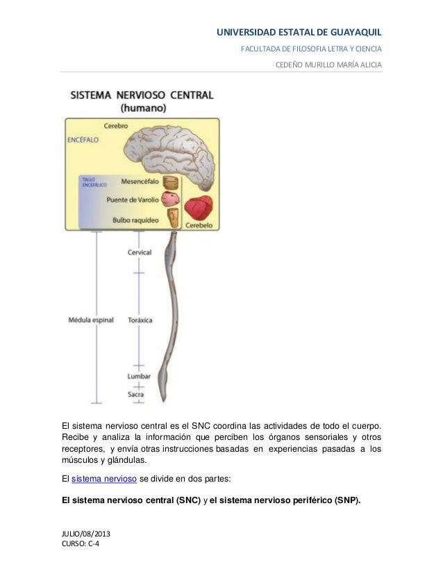 Funciones del sistema nervioso ........................