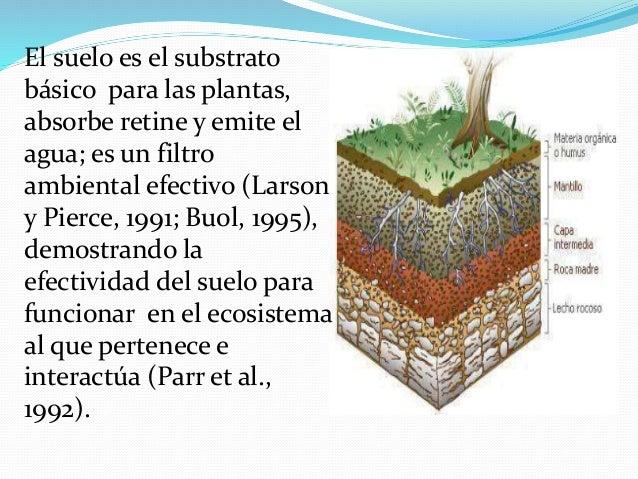 Funciones del suelo for Perfil del suelo wikipedia