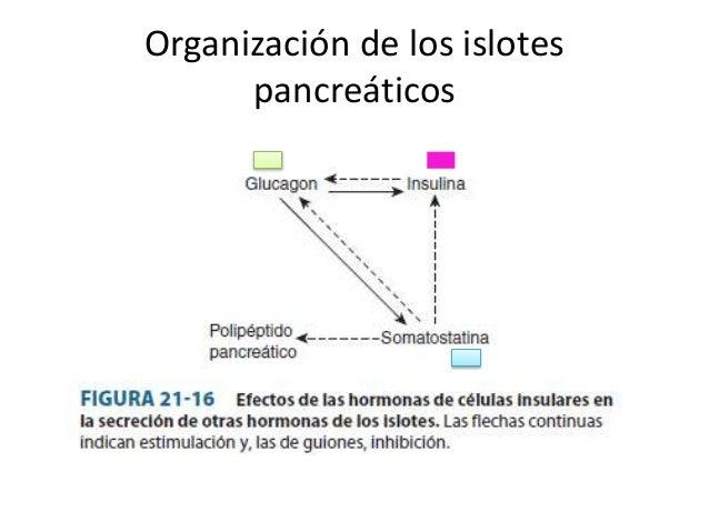 Funciones endocrinas del páncreas y regulación del..