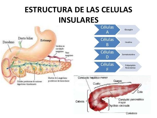 Funciones endocrinas del páncreas y regulación del