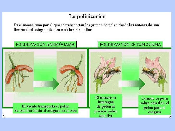 Funciones vitales de las plantas for Cuales son los tipos de plantas