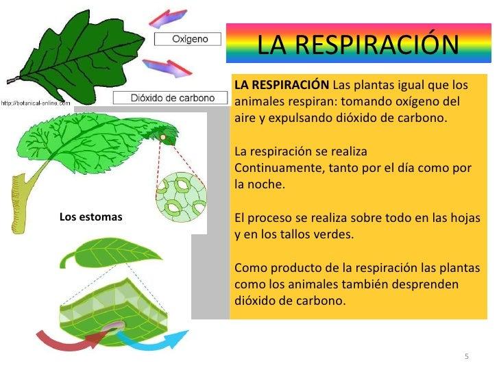 Respiracion De Las Plantas Gif: Funciones Vitales De Las Plantas