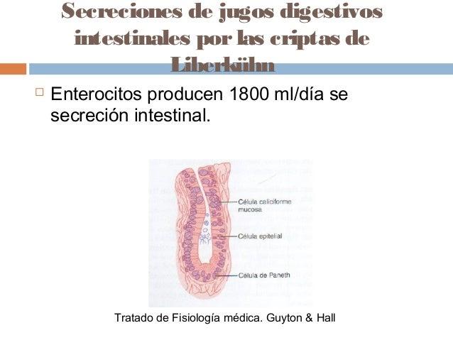 Funcion intestinal fisiologia