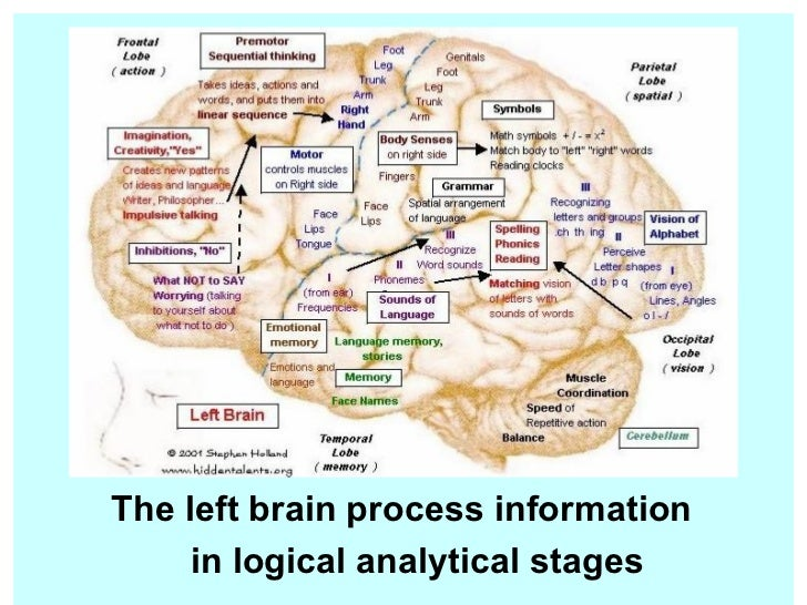 a look at the left and right side of the brain and its functions The four regions of the thinking brain made simple as well as left-brain/right-brain and creating meaning is how the right side of the brain processes.