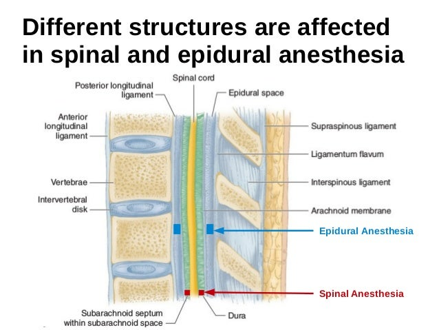 Functional Anatomy of the Spine for Anesthesia