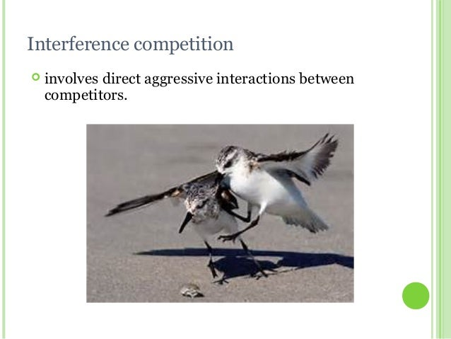 competition in an ecosystem Ecological interactions activity student handout the young scientist program - teaching kits all of these interactions are needed to maintain balance in an ecosystem competition is an interaction that harms both species.