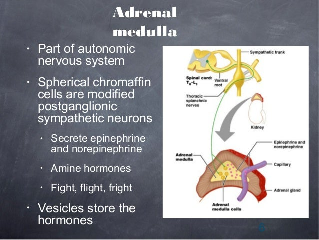Adrenal Medullary Hormones By Abdul Qahar