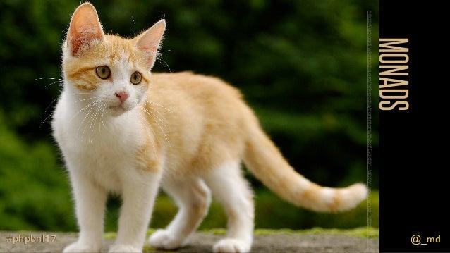 @_md#phpbnl17 MONADS @_md#phpbnl17 https://upload.wikimedia.org/wikipedia/commons/b/bd/Golden_tabby_and_white_kitten_n01.j...