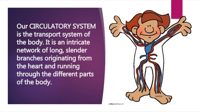 Function of each part of the circulatory system (LESSON 2)