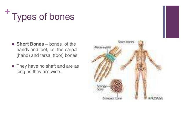 Functions and types of bones