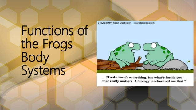 functions-of-the-frogs-body-systems-1-638 jpg?cb=1480286344