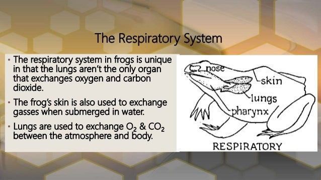 Functions of the frogs body systems