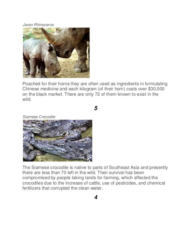 Javan Rhinoceros Poached for their horns they are often used as ingredients in formulating Chinese medicine and each kilog...
