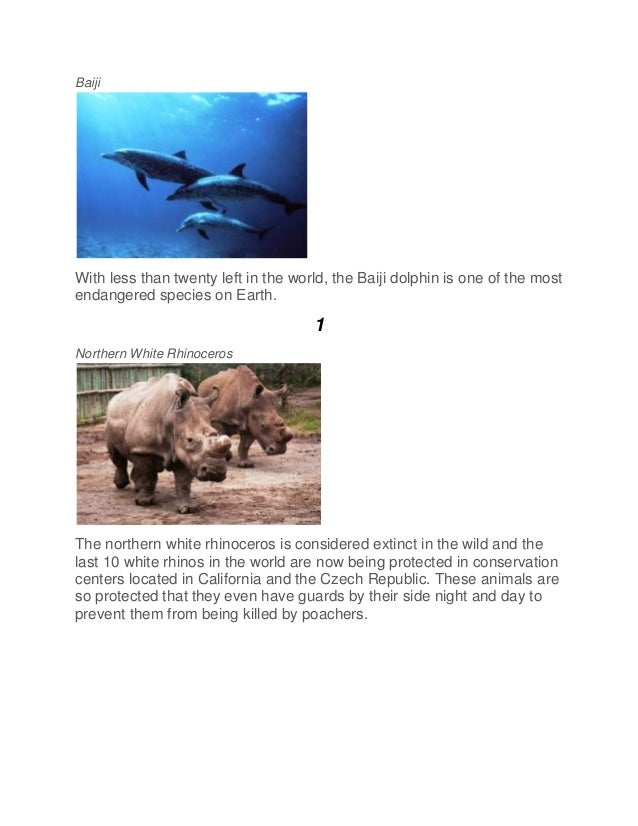 Baiji With less than twenty left in the world, the Baiji dolphin is one of the most endangered species on Earth. 1 Norther...