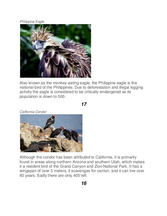 Philippine Eagle Also known as the monkey-eating eagle, the Philippine eagle is the national bird of the Philippines. Due ...