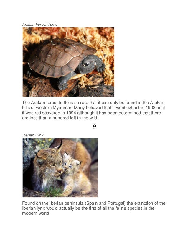Arakan Forest Turtle The Arakan forest turtle is so rare that it can only be found in the Arakan hills of western Myanmar....