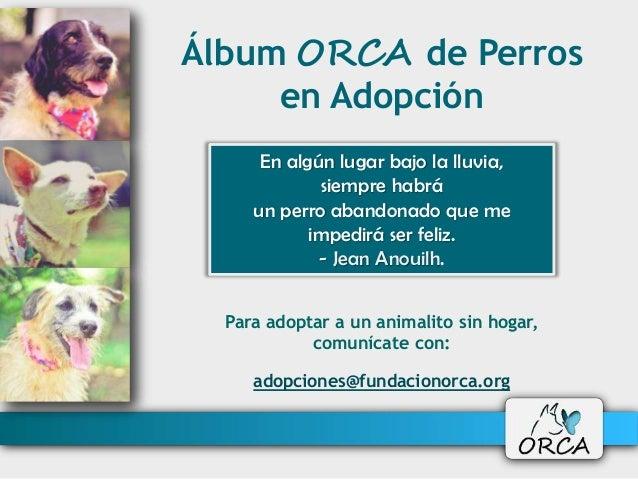 Álbum ORCA de Perros en Adopción Para adoptar a un animalito sin hogar, comunícate con: adopciones@fundacionorca.org En al...