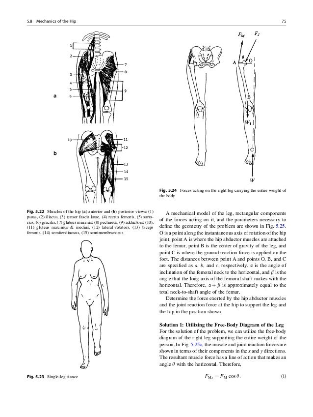 Muscle in the body diagram gallery human anatomy organs diagram fundamentals of biomechanics ccuart Image collections