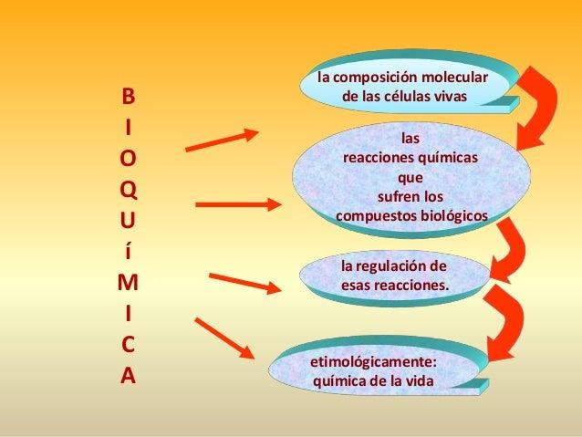 Fundamentos de la bioquimica aplicada al deporte copia