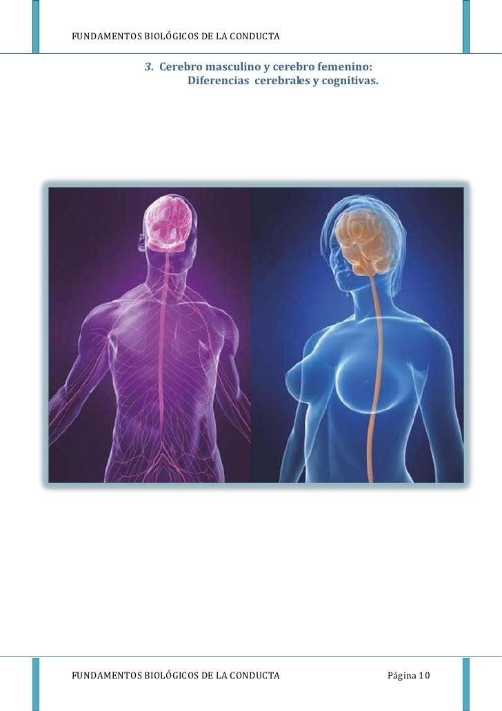 FUNDAMENTOS BIOLÓGICOS DE LA CONDUCTA            3. Cerebro masculino y cerebro femenino:                    Diferencias c...