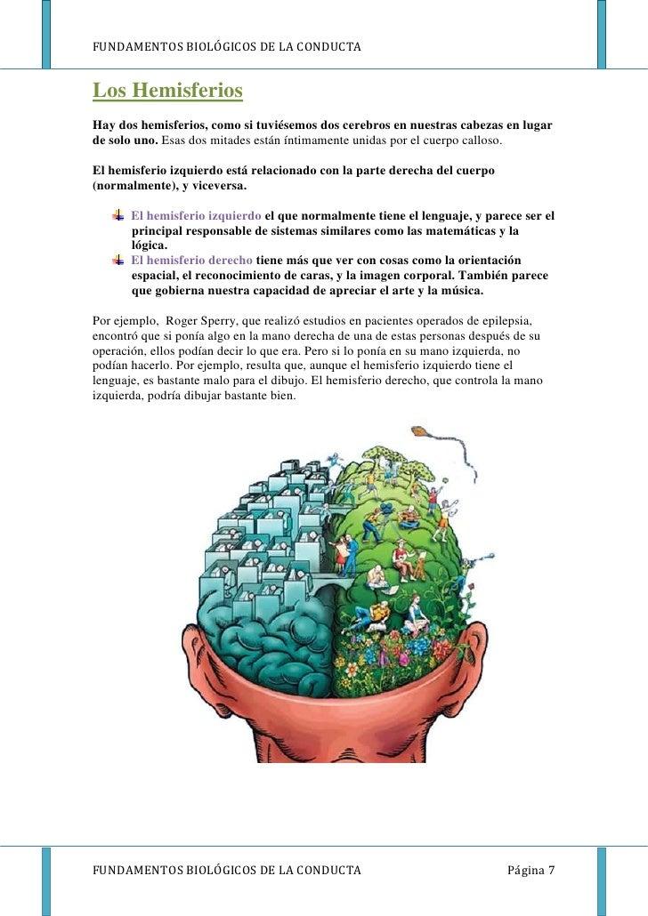 FUNDAMENTOS BIOLÓGICOS DE LA CONDUCTALos HemisferiosHay dos hemisferios, como si tuviésemos dos cerebros en nuestras cabez...