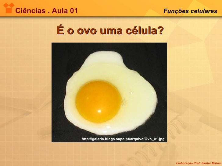 Ciências . Aula 01 Funções celulares   É o ovo uma célula? http://galeria.blogs.sapo.pt/arquivo/Ovo_01.jpg