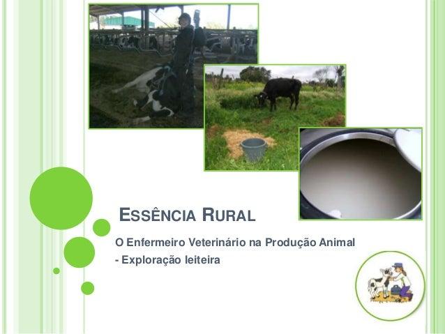 ESSÊNCIA RURALO Enfermeiro Veterinário na Produção Animal- Exploração leiteira
