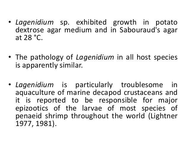 Fungal Diseases Of Shrimp
