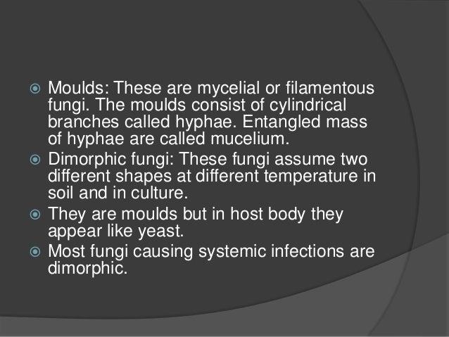 hyphate fungi