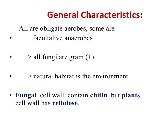 Facultative aerobic organism