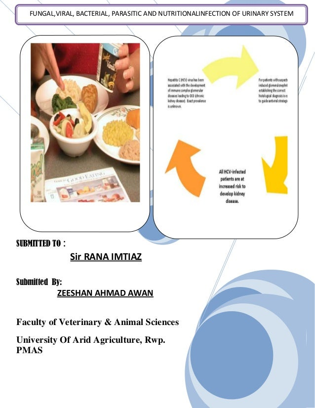 SUBMITTED TO :Sir RANA IMTIAZSubmitted By:ZEESHAN AHMAD AWANFaculty of Veterinary & Animal SciencesUniversity Of Arid Agri...