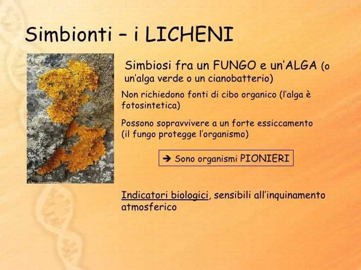 Pulsante di fungo di piedi ke 011