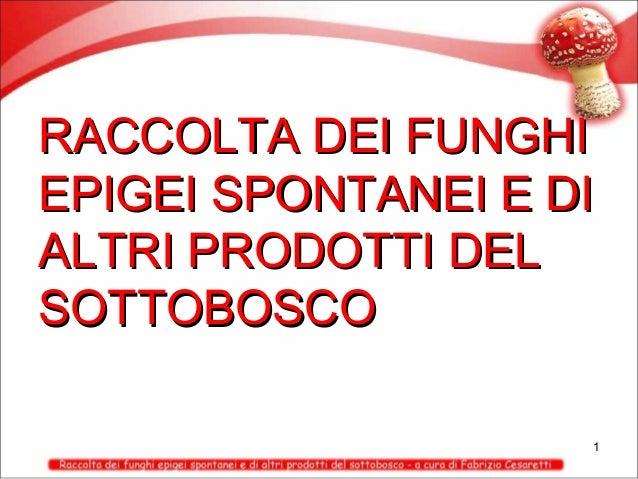 RACCOLTA DEI FUNGHI EPIGEI SPONTANEI E DI ALTRI PRODOTTI DEL SOTTOBOSCO 1