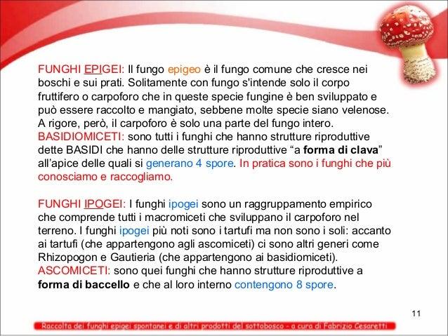 FUNGHI EPIGEI: Il fungo epigeo è il fungo comune che cresce nei boschi e sui prati. Solitamente con fungo s'intende solo i...