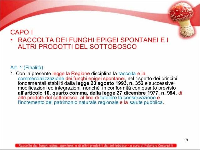 CAPO I • RACCOLTA DEI FUNGHI EPIGEI SPONTANEI E I ALTRI PRODOTTI DEL SOTTOBOSCO Art. 1 (Finalità) 1. Con la presente legge...