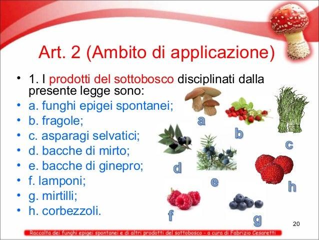 Art. 2 (Ambito di applicazione) • 1. I prodotti del sottobosco disciplinati dalla presente legge sono: • a. funghi epigei ...