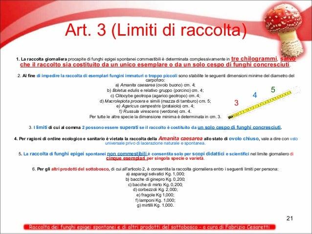 Art. 3 (Limiti di raccolta) tre chilogrammi, salvo che il raccolto sia costituito da un unico esemplare o da un solo cespo...