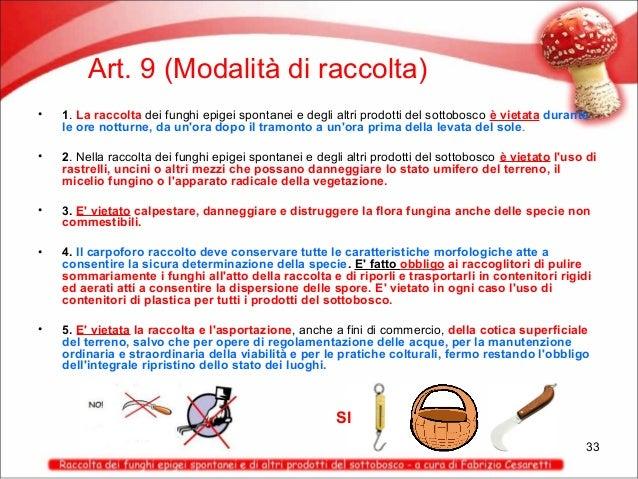 Art. 9 (Modalità di raccolta) •  1. La raccolta dei funghi epigei spontanei e degli altri prodotti del sottobosco è vietat...